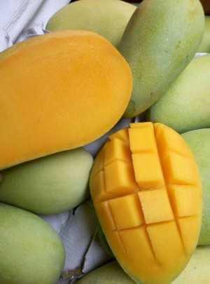 生鲜水果产地直发 果园现摘现发 水果微商一手货源