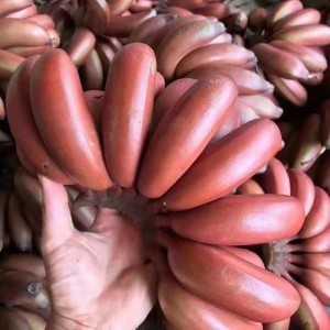 平台水果货源电商水果货源天猫拼多多京东水果货源淘宝